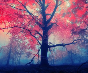 black, red, and tree image