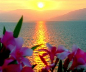 sunset, flowers, and ocean image