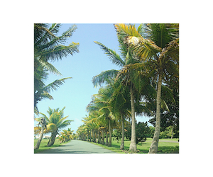 green, Island, and palmtrees image