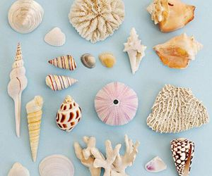 ocean, sea, and shell image