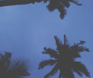 coconut and silhouettte image