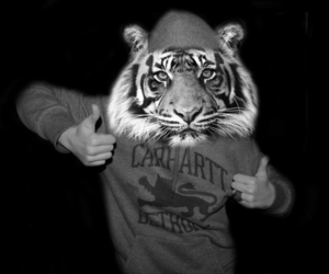 animal, black and white, and carhartt image