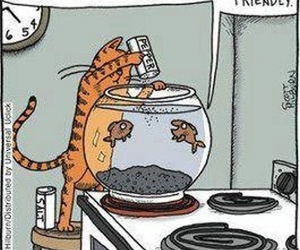 funny, cat, and fish image