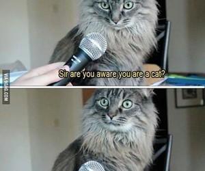 cat animals funny image