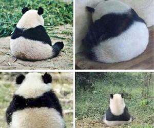 panda, cute, and sad image