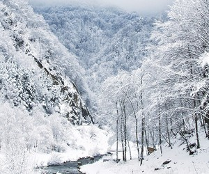 frozen, white, and winter image