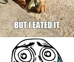 cute, flower, and puppy image