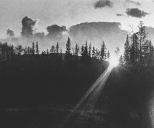 b&w, sunset, and trees image