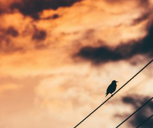 bird, wires, and clouds image