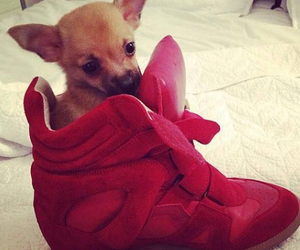 dog, shoes, and red image