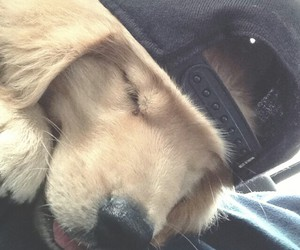 cap, dog, and cute image
