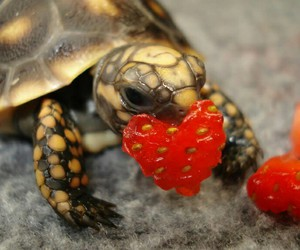turtle, heart, and animal image