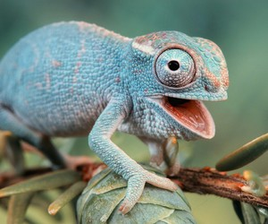 reptiles and chameleons image