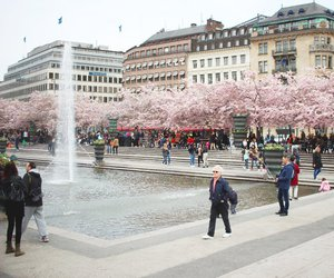 japanese, pink, and stockholm image