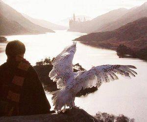 harry potter, hogwarts, and hedwig image