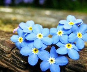 blue, flowers, and heart image