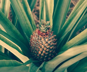ananas, fruit, and nature image