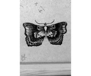 butterfly, draw, and drawing image