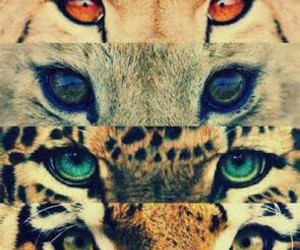beautiful, eyes, and most image