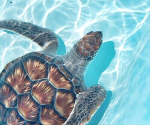 turtle, summer, and animal image