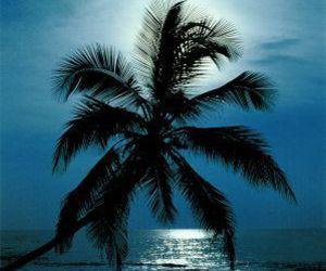 beach, Dream, and palm image