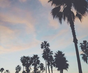 california, palms, and sky image