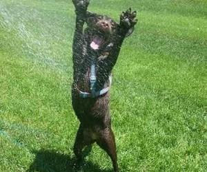 dog, green grass, and water image