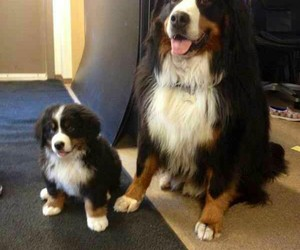big dog, little puppy, and how cute image