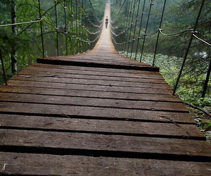 bridge, forest, and travel image
