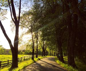 beautiful, sun, and trees image