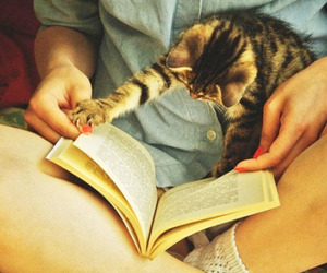 animal, cat, and book image