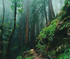 landscape, beautiful, and forest image