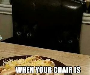 cats and chair image