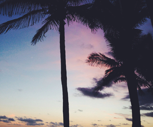 beach, palm, and pink image