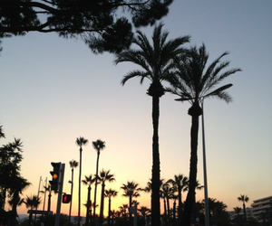cannes, palm trees, and sky image