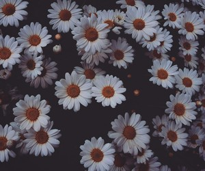 colors, daisies, and dark image