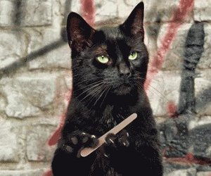 cat, funny, and nails image