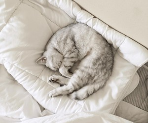 cat, white, and exercise image