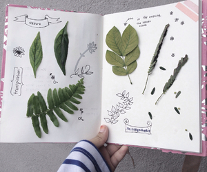 books, journal, and leaves image