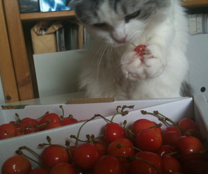cat, cherry, and kitten image