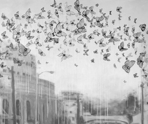 black and white and butterfly image