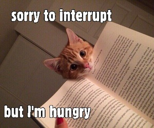 book, cats, and funny image