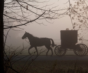 horse, carriage, and vintage image
