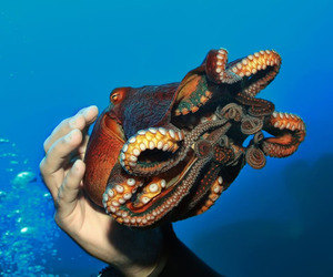 octopus, punk, and steam image