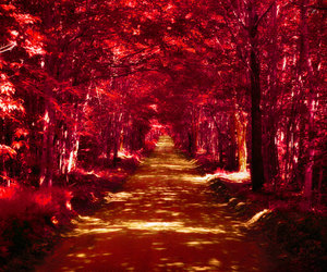 red, beautiful, and forest image