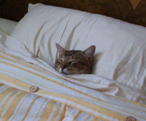 cat, sleep, and bed image