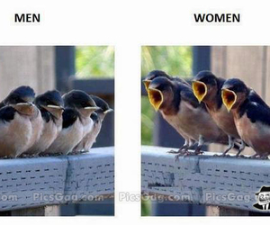 birds, funny, and lol image