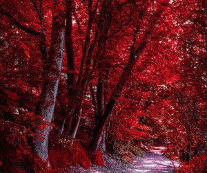 nature, tree, and red image