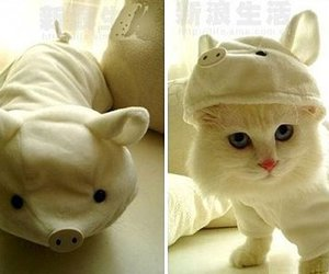 cat, cute, and pig image