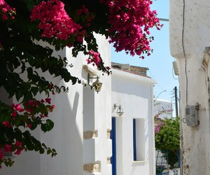beautiful, flower, and Greece image